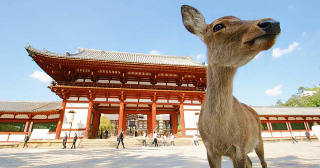 東大寺と鹿